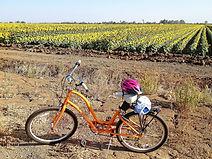 YH bike and sunflowers jpg-3.jpg