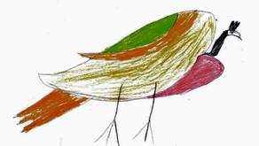 Drawings: Birds of Afghanistan