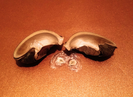 Filling the Empty Shell