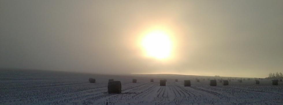 Lester winter field.jpe