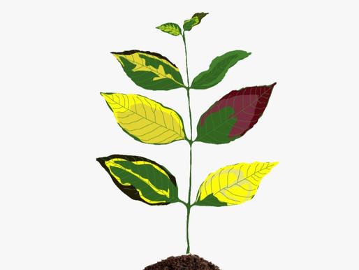 Señales que nos entregan las plantas
