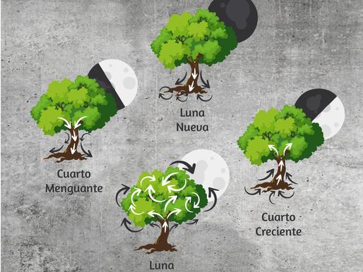 Las fases lunares y cómo influyen el cultivo de plantas