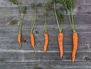 Sticks vs. Carrots: 5 ways to keep your program positive!