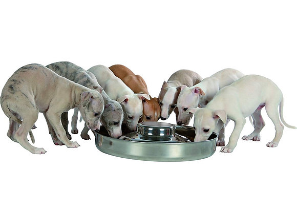 Stainless Steel Puppy Bowl 4.0L Capacity