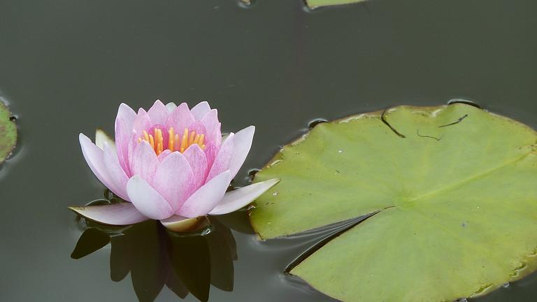 August 13-15th Weekend Healing Retreat