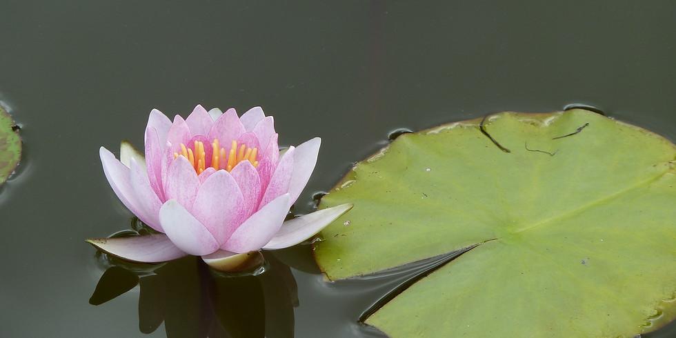 Nov. 13-15th Weekend Healing Retreat