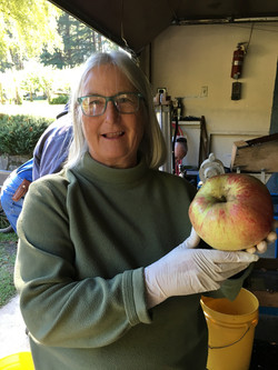 Apple Squeeze- Julia Cook