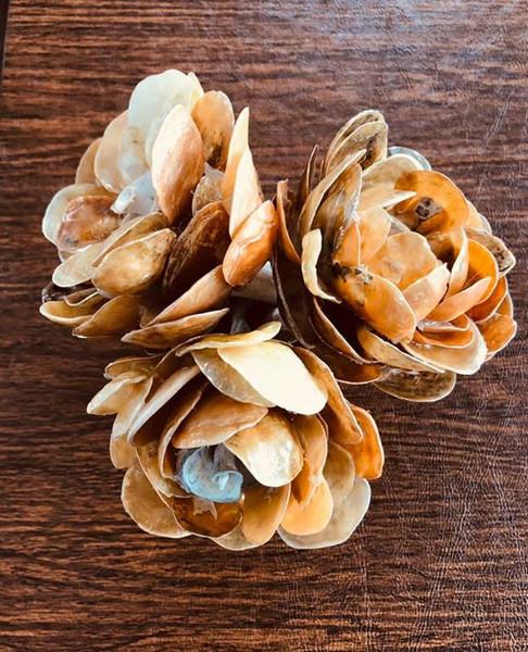 Jingle Shell Flowers