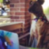 Rufus & Flo sydney marketing services
