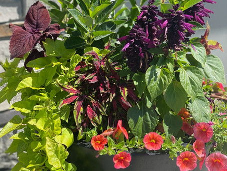 Spring Prep: Everything You Need to Know About Planter Containers