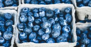 Summer Staycation Ideas: PYO Blueberries