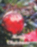 Cover 550x683 12.19pixels.jpg