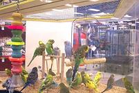 Pet-shop-birds_mini-770x513.webp