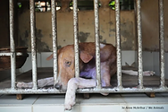 WA-homeless-dog-copy-770x511.webp