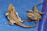 Stock-lizards_mini-770x508.jpg