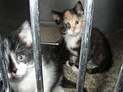 kittens-at-shelter_mini-770x578.webp