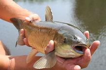 Optimized-Angling-carp-caught_mini-770x5