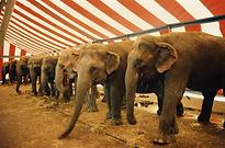 Circus-elephants.webp
