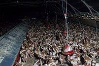 Free-Range-Egg-Farm-Chickens-1-770x513.j