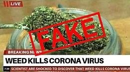 weed-kills-coronavirus-fake-news-1.jpg