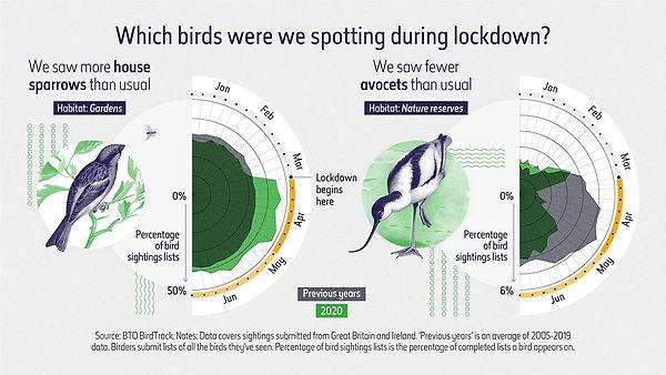 beyond-words-bird-species-full-width.jpg.thumb.1160.1160.jpg