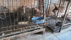 civet_cat_investigation_peta_asia_web_c1