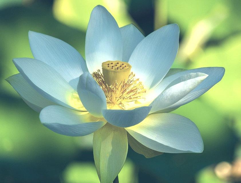 lotus5_edited.jpg