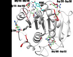 Puentes salinos incoporados en nuestra enzima
