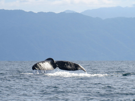 Chasing Whales and Butterflies in Mexico