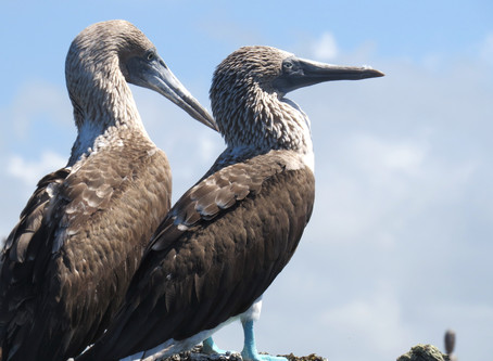 The Galapagos Islands - How to Travel Independently