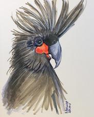 Parrot study