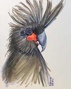 """""""Proud parrot"""""""