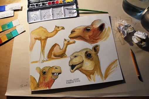 Camel study