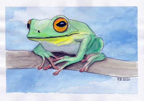 Frog on branch 2020