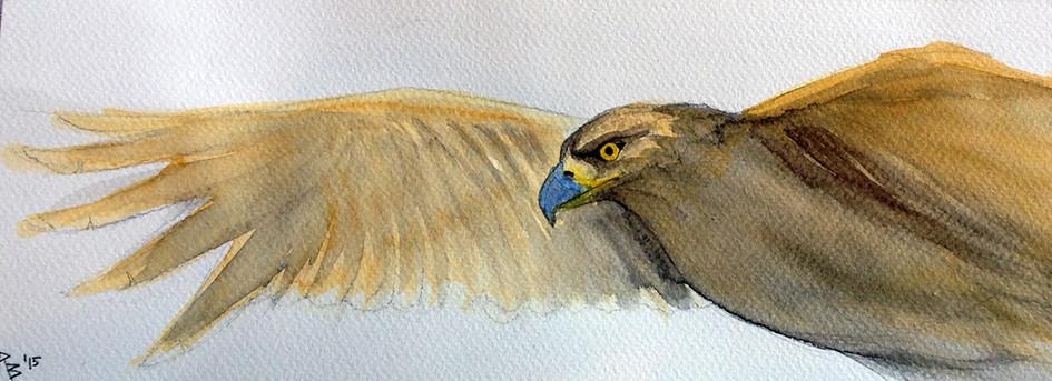 """""""Kings Eagle"""""""