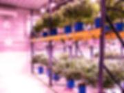 PANA8302alt.jpg