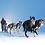 Thumbnail: Non-Stop Nansen Nome Harness