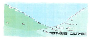 terrasses_cultivées-1.jpg