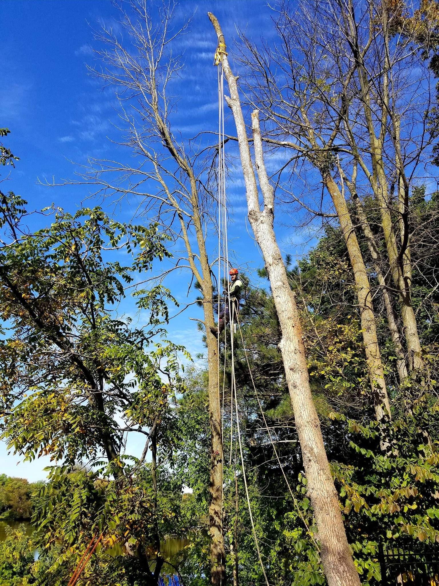 Abattage_d'arbre_Lanaudière