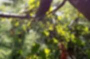 Taille d'arbre fruitier.jpg