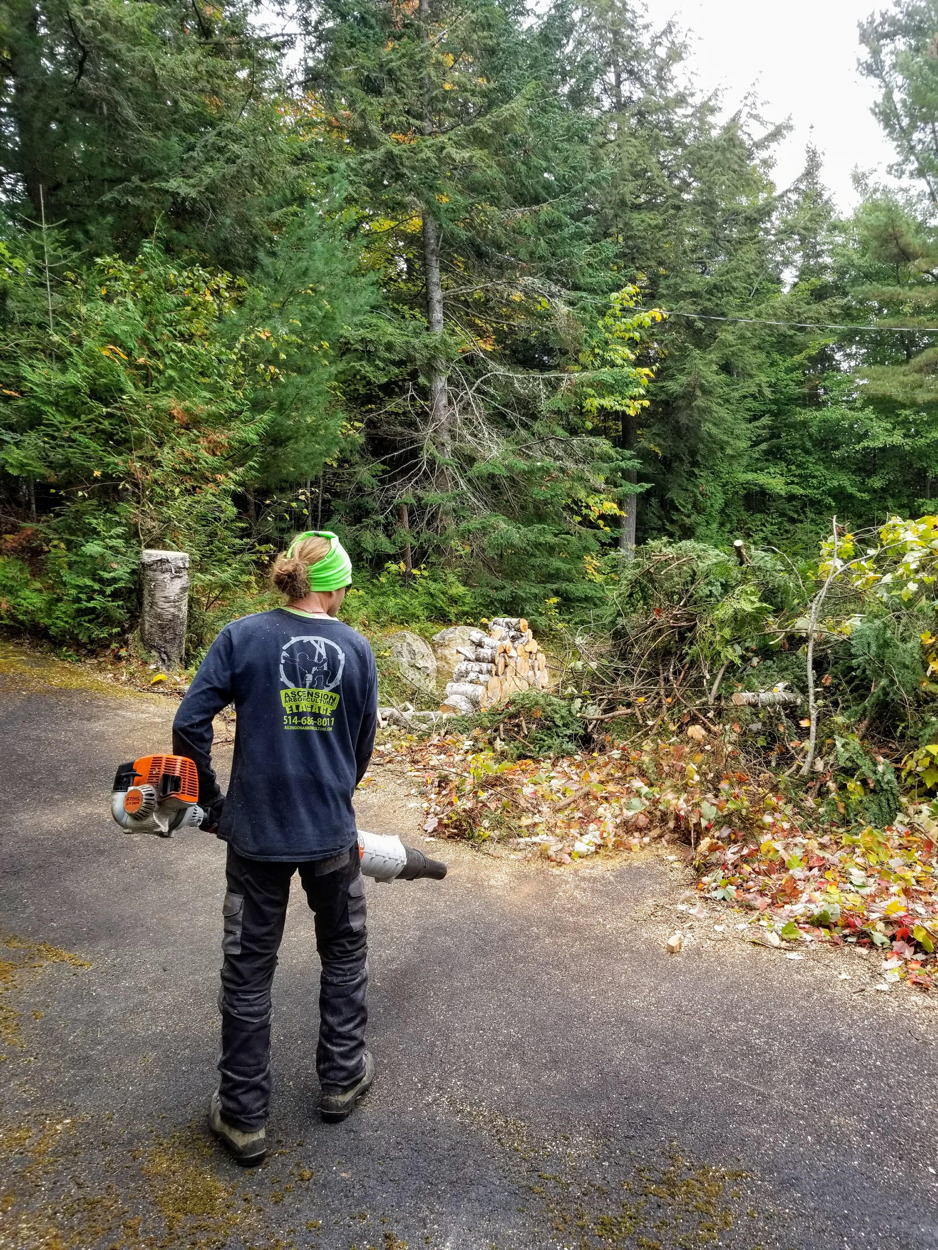 Émonder un arbre
