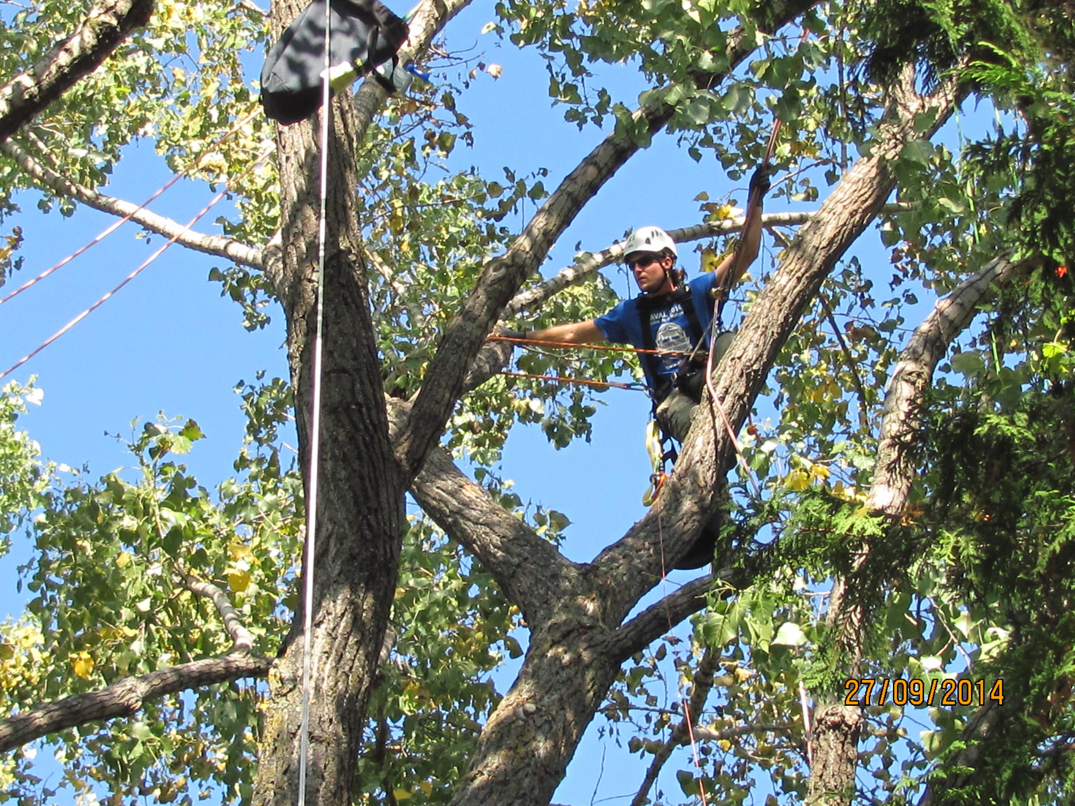 Abattage d'arbre Rawdon