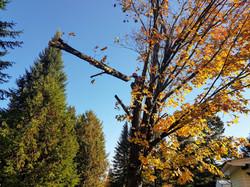 Coupe d'arbre Lanaudière