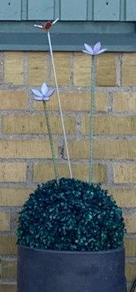 Lång blomma