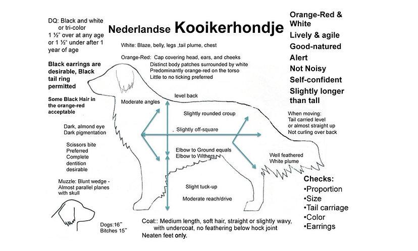 Illustrated drawing of Kooiker.jpg