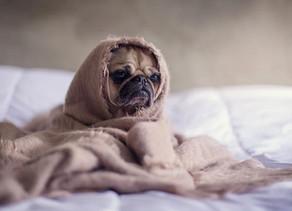 Conheça os cuidados com animais de estimação no inverno