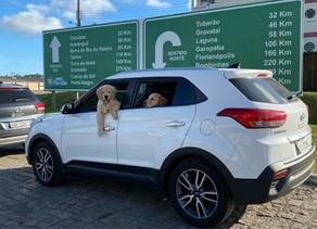 """Projeto """"Expedições Olá Pet!"""" percorre 3 mil quilômetrosem viagem de carro pelo sul do Brasil"""