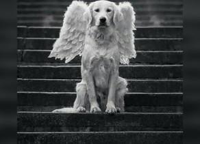 Carta de um cãozinho que acaba de partir!