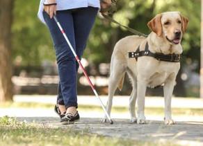 Lei municipal garante transporte de cães-guia em São Paulo