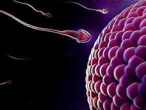 Covid-19: os impactos nos tratamentos de fertilidade